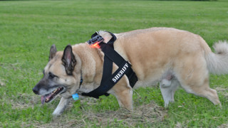 K-9 Mount and Harness - Guardian Angel Personal Safety Device