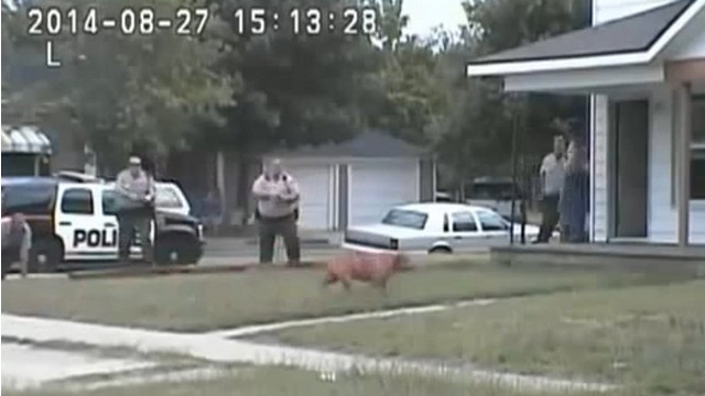 Video Shows Kansas Officer Shoot Pit Bull