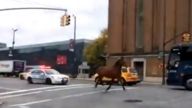 NYPD Pursues Runaway Carriage Horse