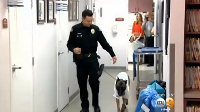 Wounded Calif. Police K-9 Goes Home