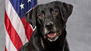 Wash. Police Dog Dies After Inhaling Meth