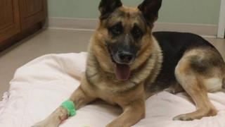 Conn. Department Mourns Loss of Police Dog