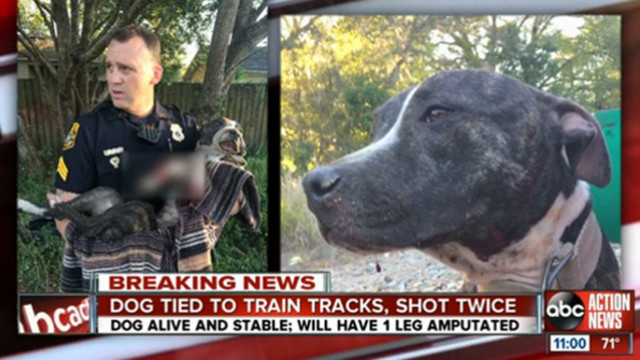 Tampa Police Find Dog Shot, Tied to Tracks
