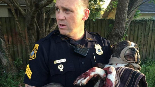 Tampa Police Rescue Dog Tied to Tracks