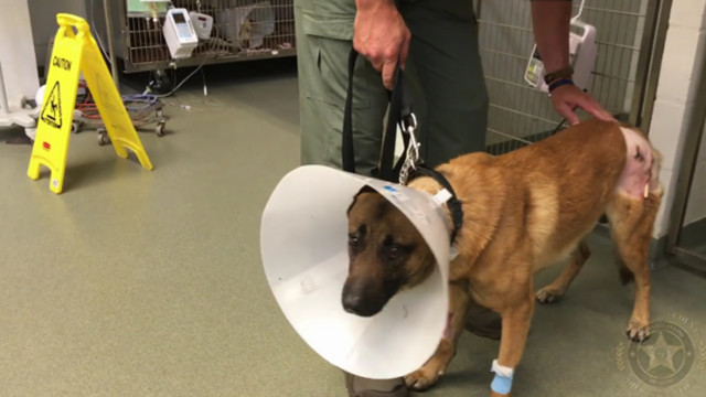 Florida Police K-9 Takes Bullet to Save Handler