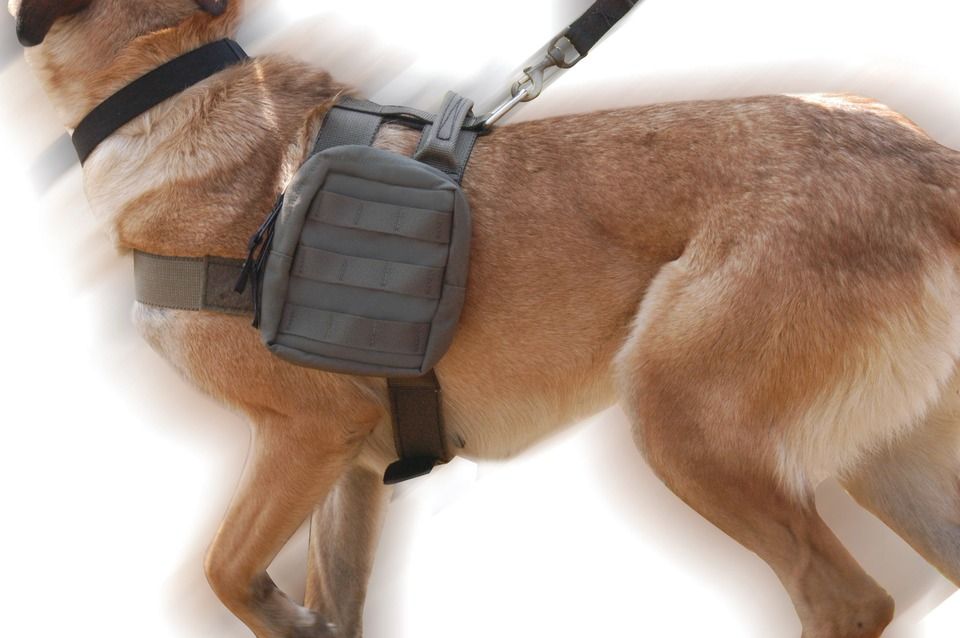 Diamondback Tactical Extreme Duty Harness on canine tracking harness