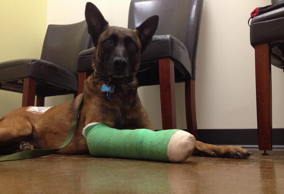 Calif  K-9 Accidentally Shot While Being Attacked by Pit