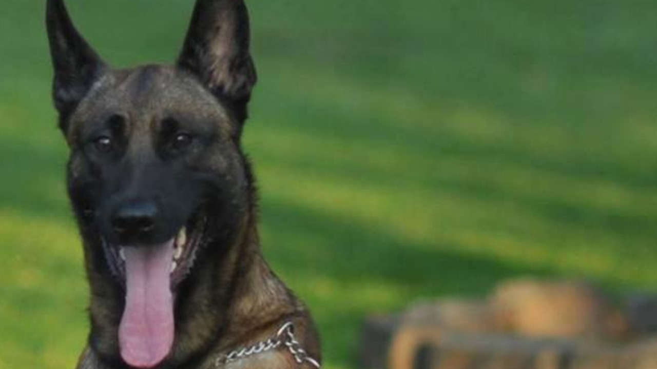Bell County, Kentucky Sheriff's K-9 Kane Killed During Search