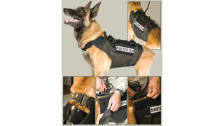 RAPTOR Harness