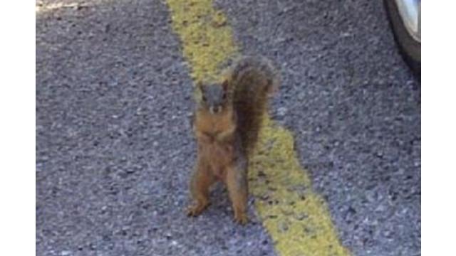 squirrelfugitive_10257174.jpg