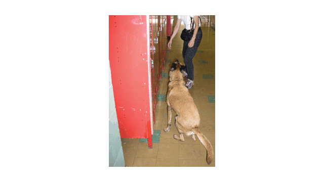 Drug And Bomb Dog Search Services