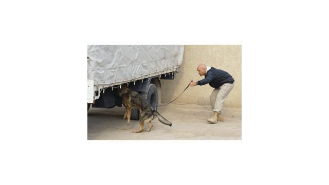 Bomb Patrol Dual Purpose Dogs