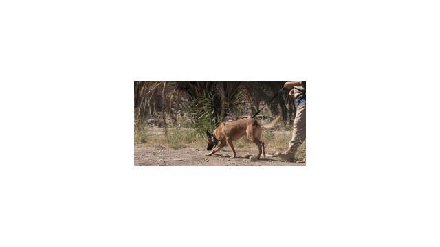 trackingdog_10629183.gif