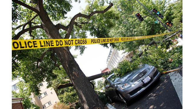 Tree Blocks Road and Sidewalk in Washington, DC.jpg_10736488.jpg