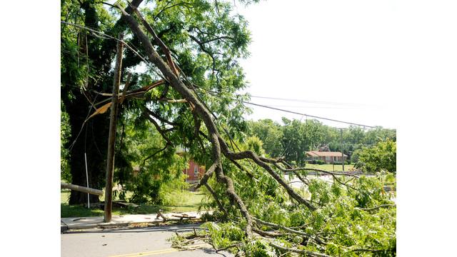 Storm Causes Tree to Fall on Power Lines in Virginia.jpg_10736496.jpg
