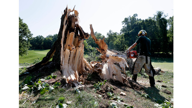 Worker Uses a Chainsaw to Clear a Tree in Maryland.jpg_10736495.jpg