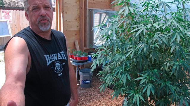 Vendor Shows Off Medical Marijuana Plant in Oregon.jpg_10738979.jpg