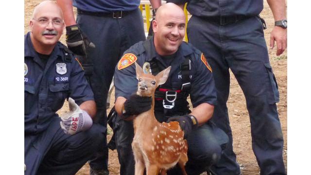 NY-deer-rescue.jpg_10755903.jpg