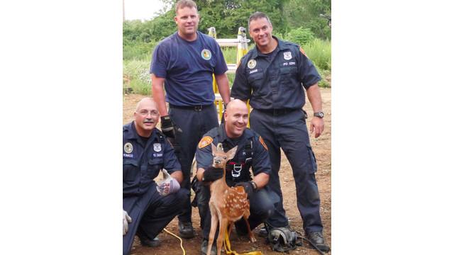 NY-deer-rescue-2.jpg_10755904.jpg