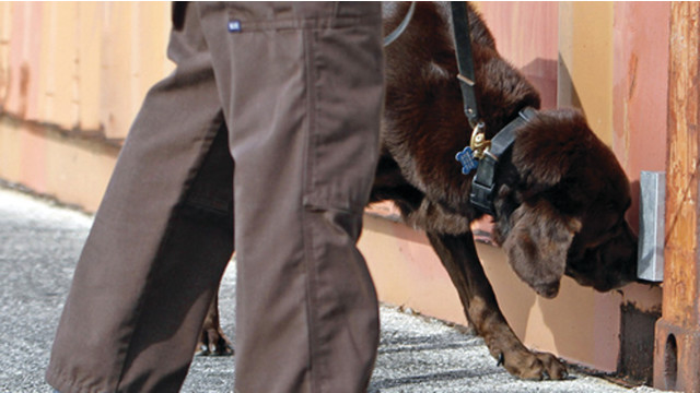 Legal K9 Searches