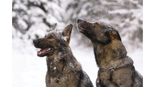 K9 Operations In The Winter