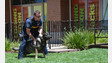 Expert: Bond Between K-9s, Handlers Strong
