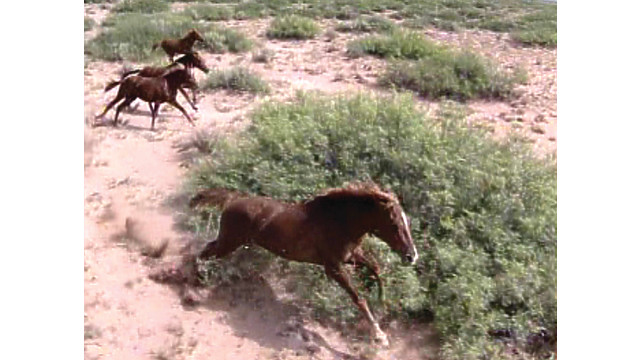 a-rhodes-canyon-mare-fearless_10892340.psd