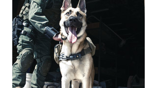 K-9 Chest Mounted Camera (K-9CMC1)