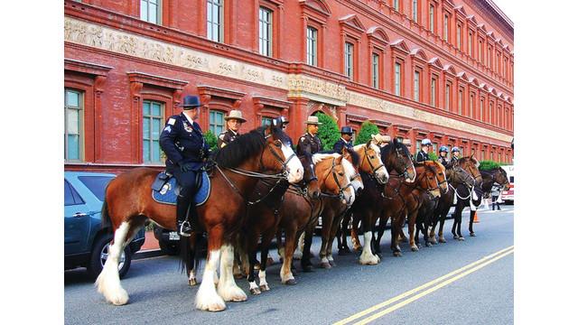 police-horses_10937408.psd
