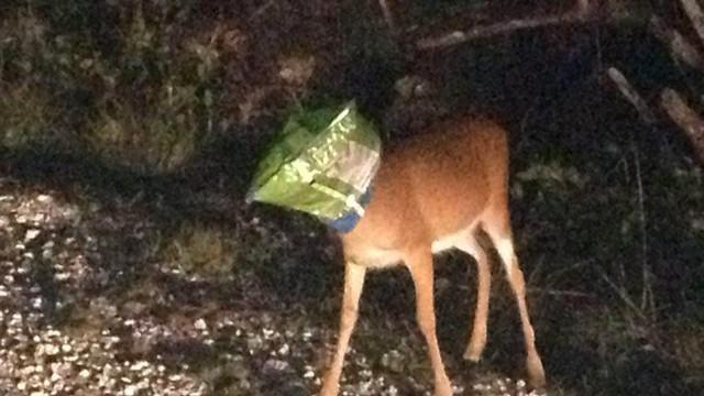 deerheadinbag.jpg
