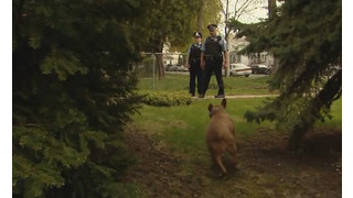 Police and Dog Encounters Training Videos