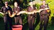 Florida Police Officers Capture 12-Foot Python