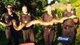 Florida Police Capture Massive Python