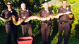 Florida Police Officers Capture 12-Foot Python